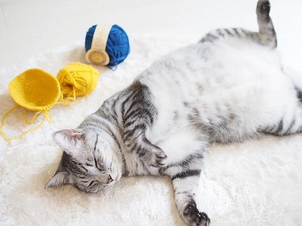 お腹を出して寝っ転がってるサバトラ猫と毛糸玉
