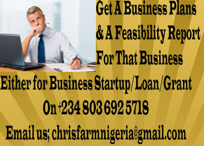 Work, Planning, Feasibility Report On Business Plans