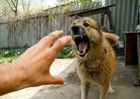 rüyada+köpeğin+beni+öldürmesi
