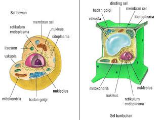 Sifat Kimia dan Fisika Protoplasma