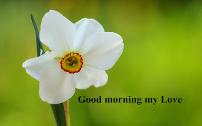 good morning images for lover with flowers - Daffodil flower images