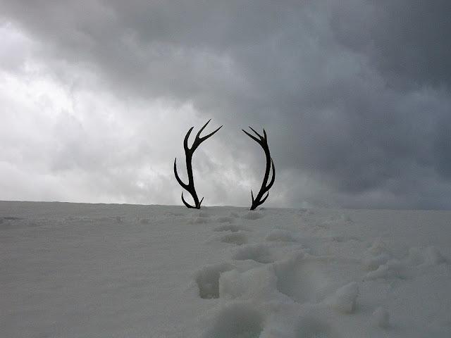 Palco di cervo