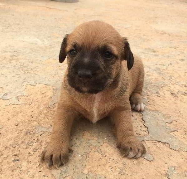 cachorros de talla pequeña
