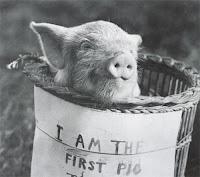 El primer cerdo volador de la historia