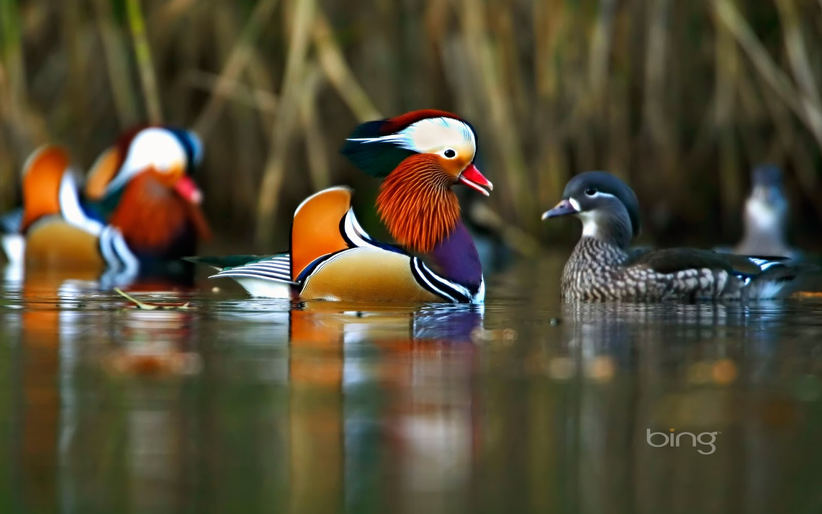 Bing Wallpapers [Daily]: March 2013