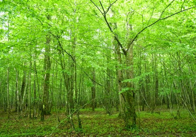Bosques del Loira.