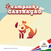 Prefeitura de Cajati seleciona Cães e Gatos para a Campanha de Castração