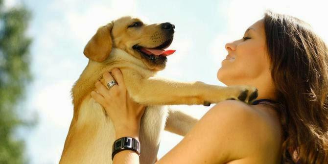 Cara Melatih Anjing Agar patuh/nurut dengan kita