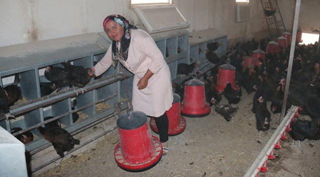 Tavuk çiftliği hayaline devlet desteği.