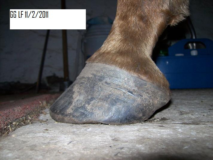 Kate S Hoof Care Blog The Evolution Of Quot Navicular Quot Feet
