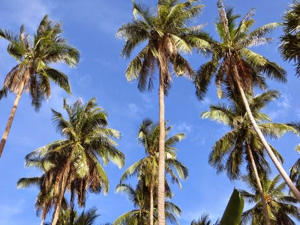 Пальмы и небо Таиланд