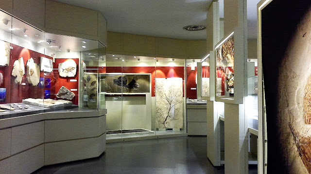 Esposizione fossili Bolca