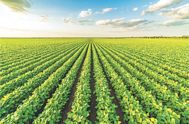 Agriculture: Soya bean a miracle crop for national food security.
