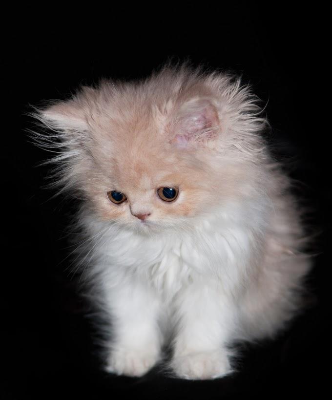 Anak kucing comel (Tedi pun comel jugak)