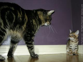 Hal yang Dibenci Oleh Kucing