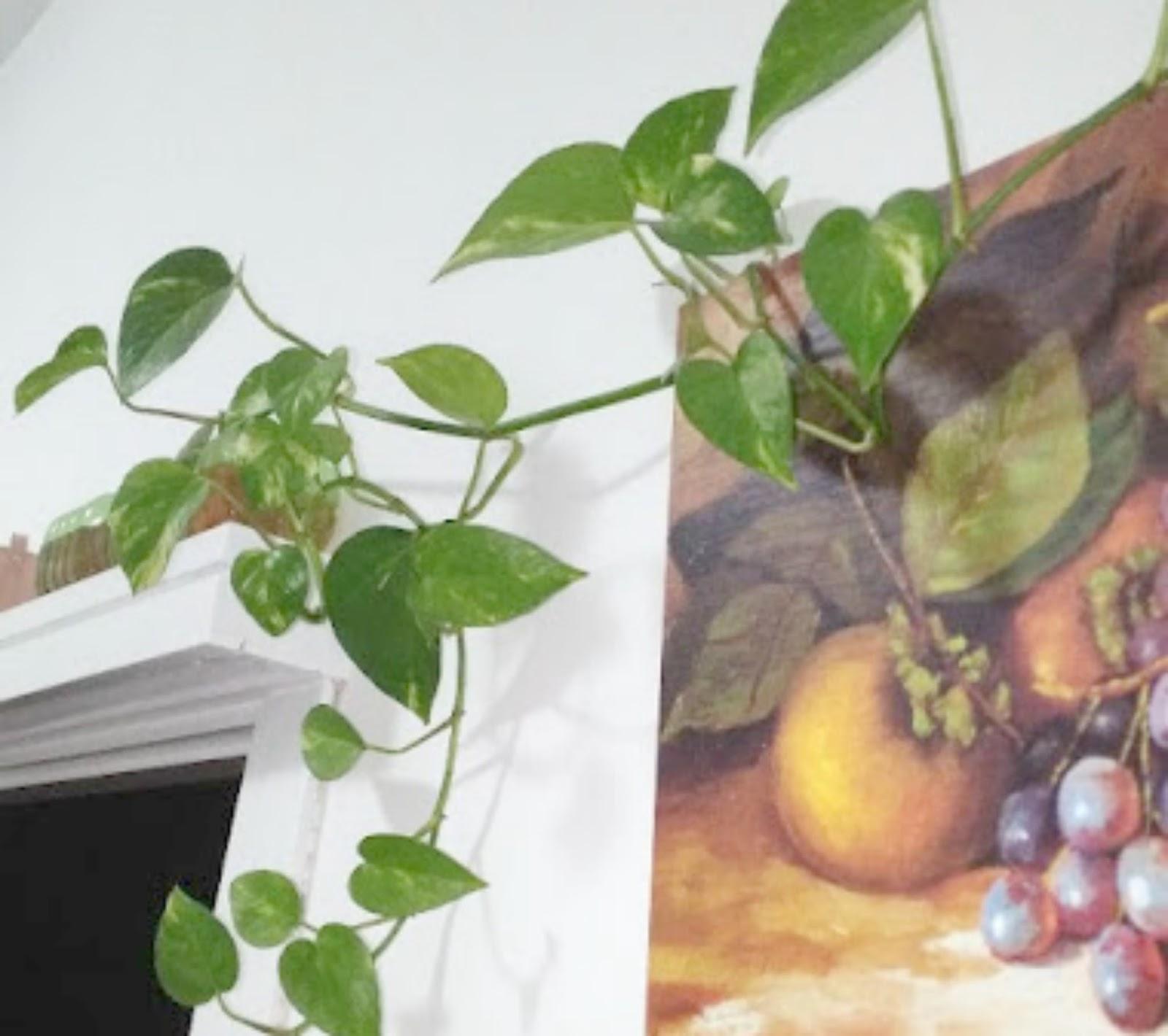 Come Seccare Le Piante come far crescere le piante in una bottiglia di plastica