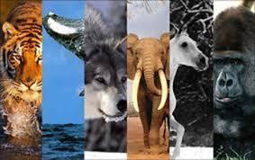 Vamos conhecer algumas das características dos mamíferos