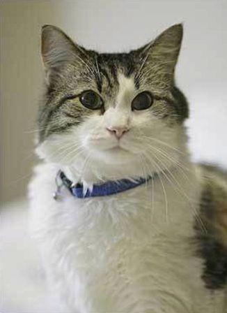 oscar kucing yang mampu mengetahui kapan seseorang akan meninggal dunia
