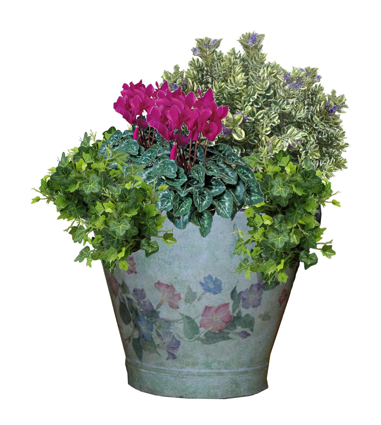 Composizione Vasi Da Balcone il balcone d'inverno | sfumature verdi