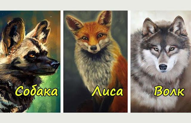 Выберите самое сильное животное и узнайте, что о вас может рассказать ваш выбор!