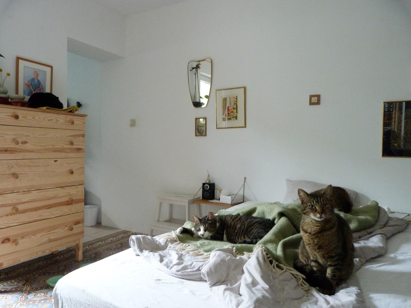cat bedroom.  Fat Cat