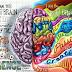 Fungsi Dan Perbezaan Otak Kiri dan Kanan