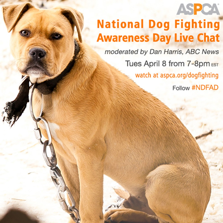 dog fighting, ASPCA, Michael Vick, animal cruelty, NY Jets,