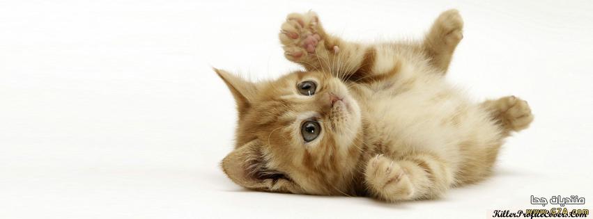 كفرات قطط للفيس بوك واغلفة قطط للبروفيل 2014-2015