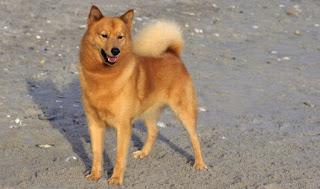 World's Rarest Dog Breeds