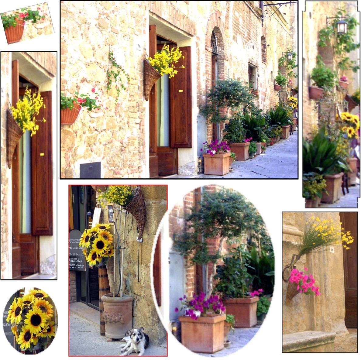 Best Flowers Hanging Pots