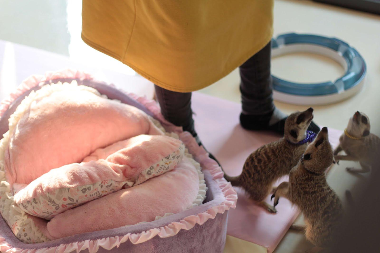 meerkat cafe seoul hongdae