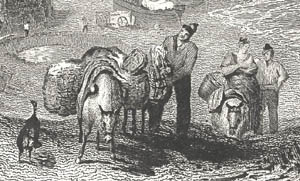 Packhorses laden with panniers.