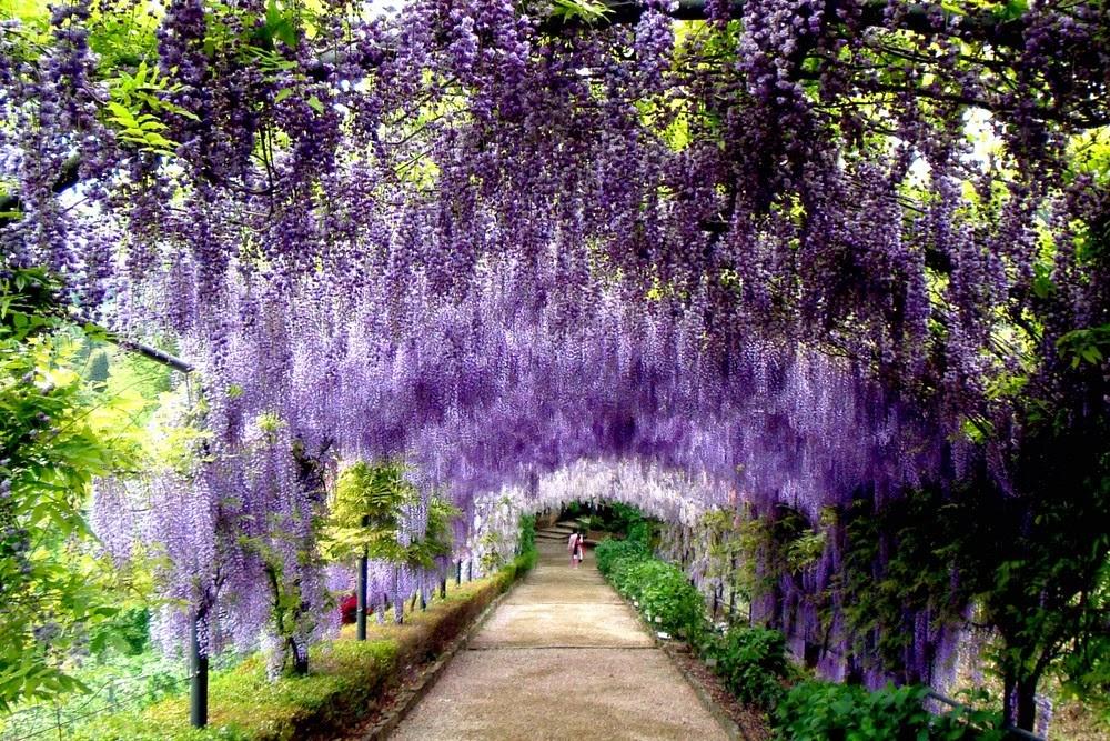 Giardino dei sogni ad ogni segno zodiacale il proprio for Giardino fiori