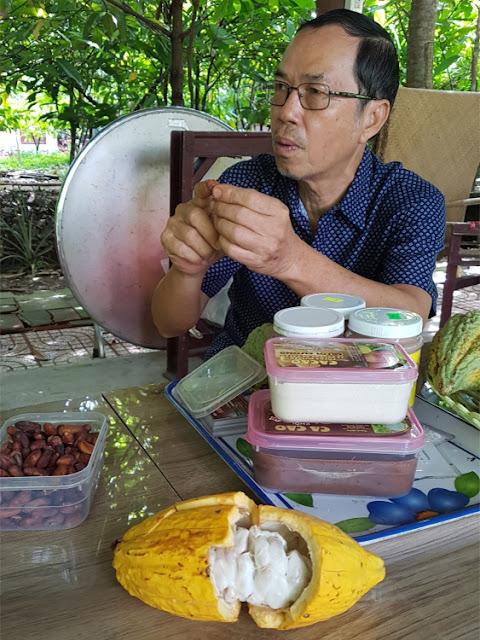Cacao plantage van Muoi Cuong