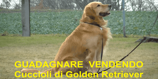 guadagnare_vendendo_Golden_Retriever