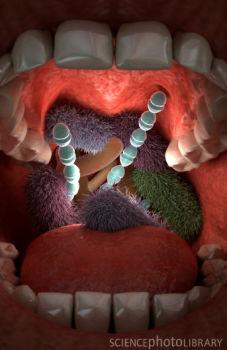 http://i2.wp.com/3.bp.blogspot.com/-0TkB6bg2lv8/TrtzaTeRJJI/AAAAAAAAA2s/T8go8GBKAQM/s1600/Mouth_bacteria.jpg