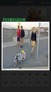 девушка на улице выгуливает свинью на поводке