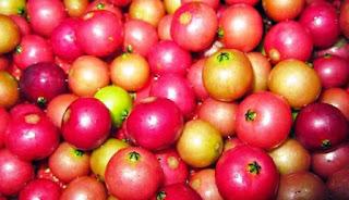 Buah kersen merupakan buah yang sering tumbuh liar alasannya buah ini sanggup tumbuh dengan ba Kersen, Buah Liar dengan Banyak Manfaat Kesehatan