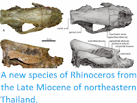 http://sciencythoughts.blogspot.co.uk/2014/01/a-new-species-of-rhinoceros-from-late.html