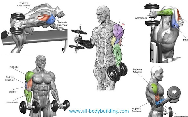 Top 4 Dumbbell Exercises For Arms - all-bodybuilding.com