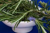ledum-palustre-homeopatie