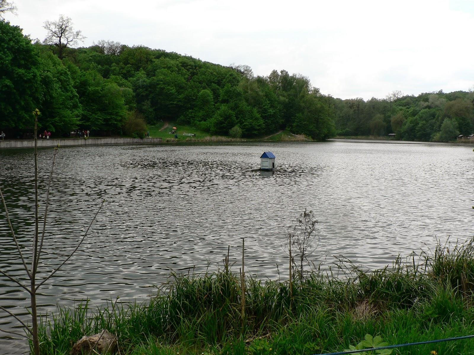 Озеро-Голосеевский-Лес