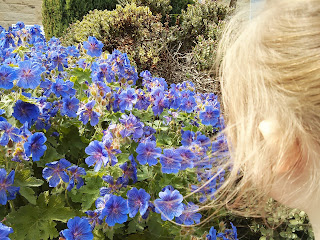 Eldest looking at flowers