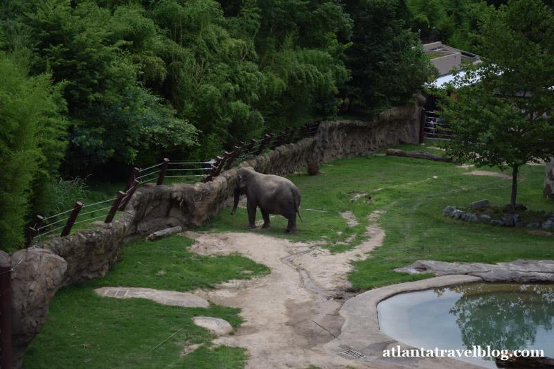 Смитсоновский национальный зоологический парк