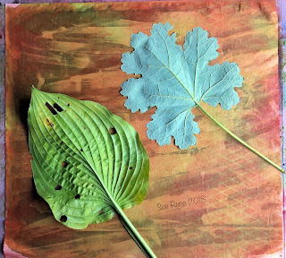 Wet cyanotype_Sue Reno_Image 499