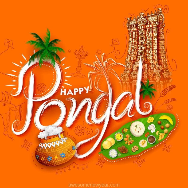 Pongal 2019 Images