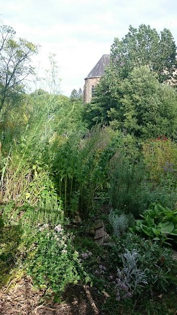 blog sur la carneille le jardin aromatique et botanique. Black Bedroom Furniture Sets. Home Design Ideas