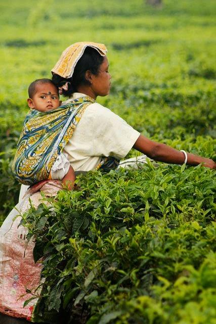 10 Best Backpacking Destinations in India | Tea picker in Darjeeling, India
