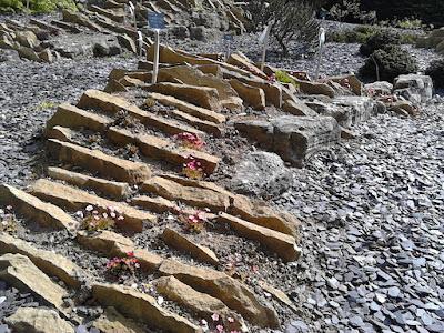 Alpine planting Improve your garden Hillier Gardens Green Fingered Blog