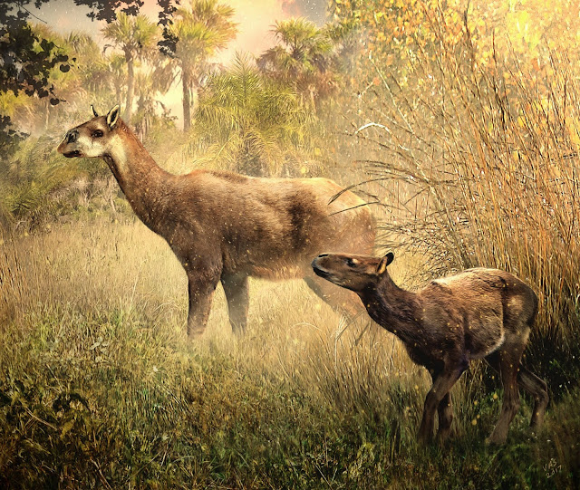 Two new Miocene mammals discovered in Bolivia